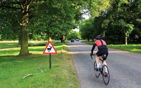 Cyclist in Richmond Park