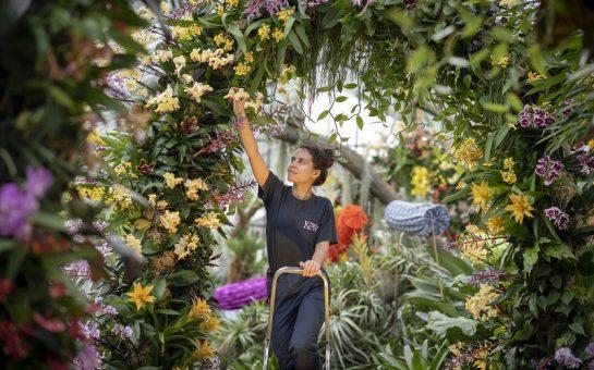 Kew apprentice gives Royal Botanic Gardens Kew Orchid Festival 2020