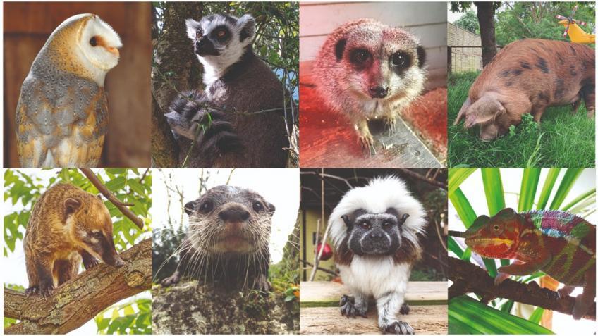 Battersea Zoo appeal