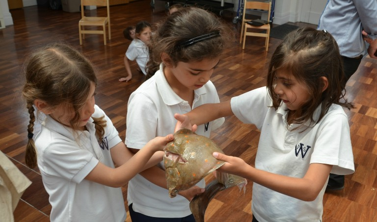 FairCatch school kids with fish