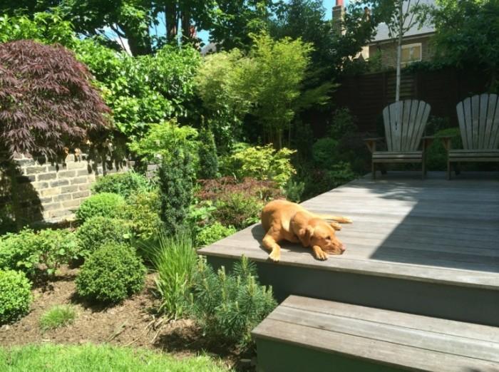 Richmond Hill Open Gardens decking dog