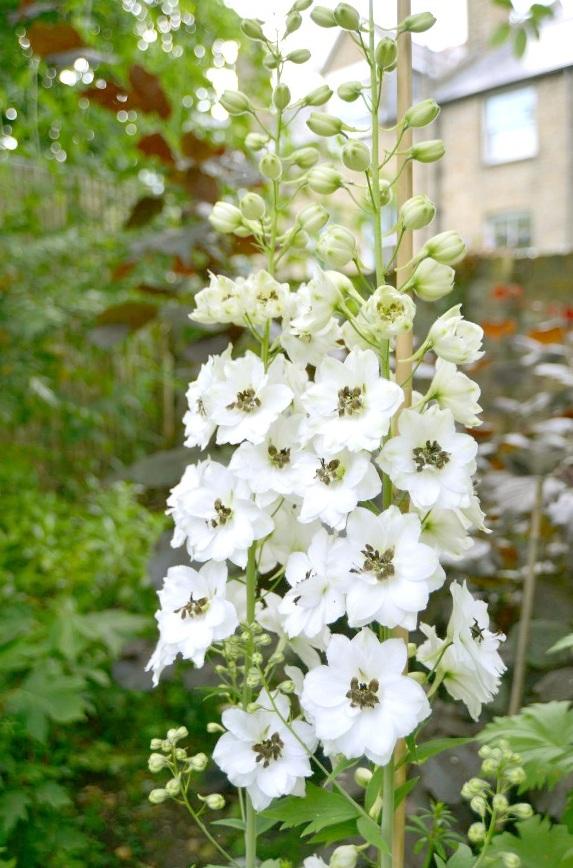 Richmond Hill Open Gardens flowers