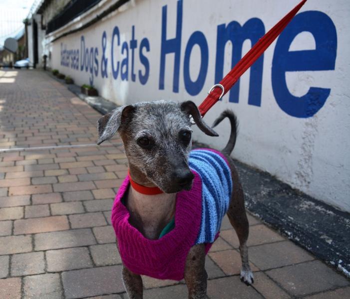 Skippy purple and blue jumper Battersea