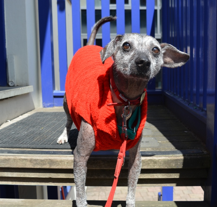 Skippy red jumper2 Battersea