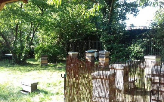 Twickenham and Thames Valley Beekeepers' Association apiary