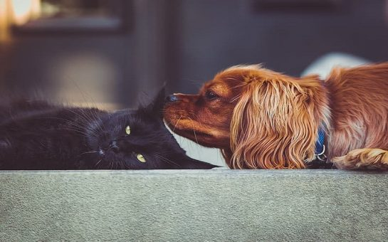 black-cat-and-brown-dog