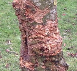 damaged-trees