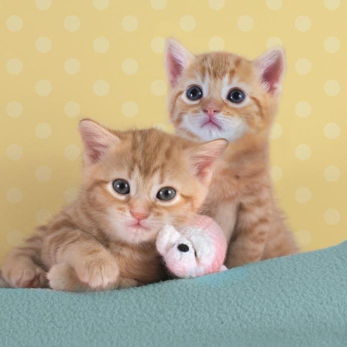 ginger kitten battersea kitten shower