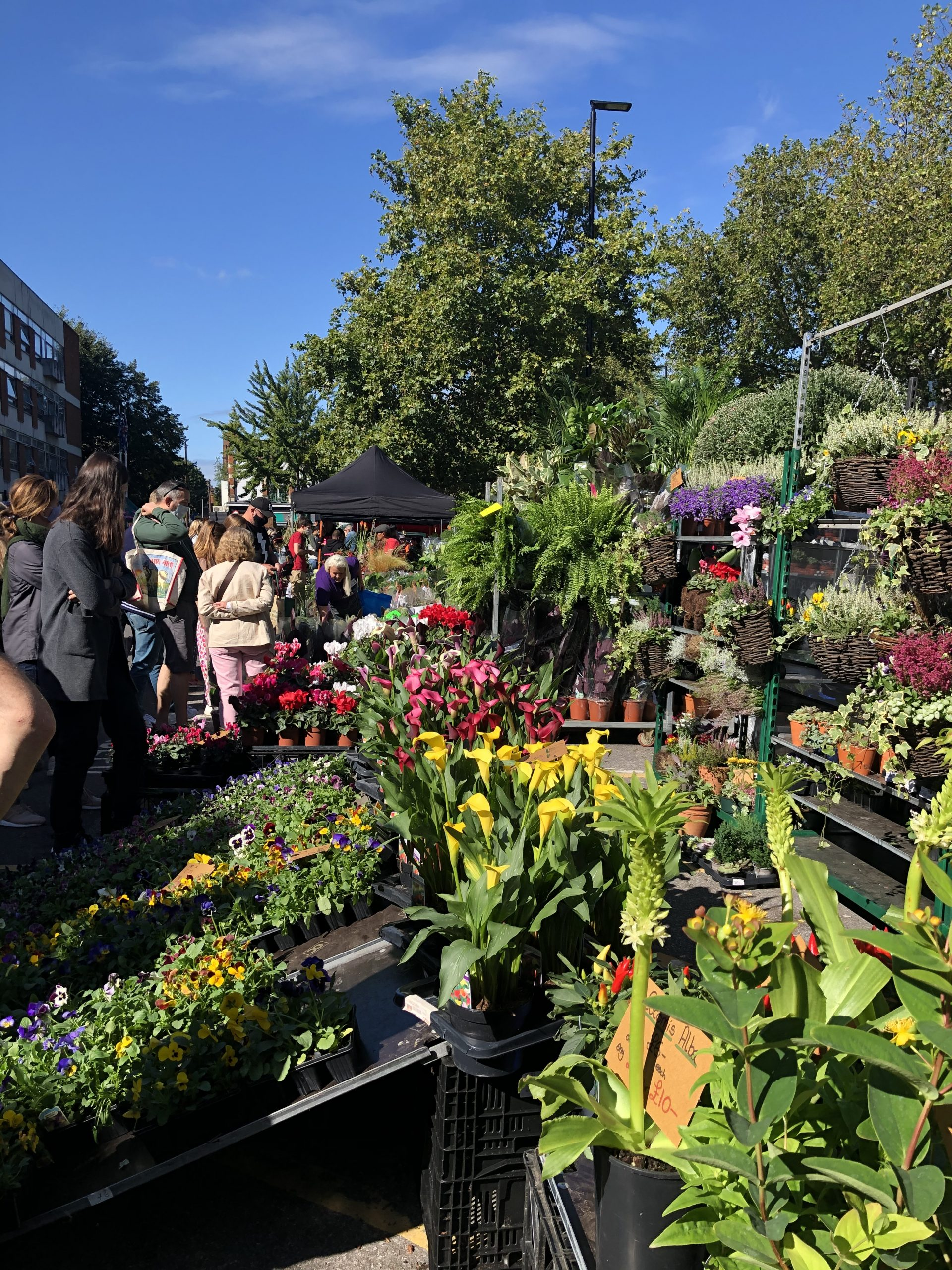 Bedding, succulents and tropical plants amongst a wide variety of horticultural products are on sale at the new Chiswick Flower Market.