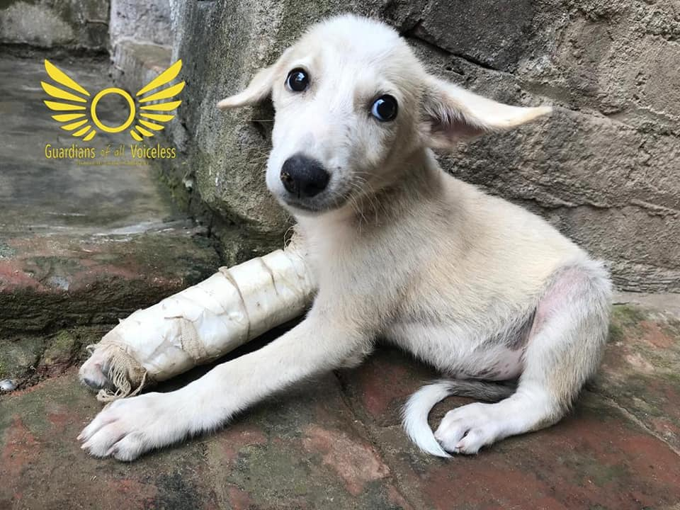 Gobi as a puppy in India