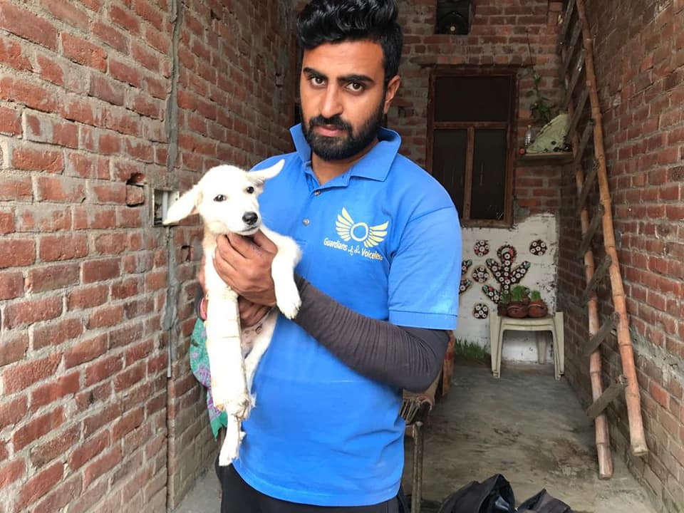Gobi as a puppy in India, with a member of Guardians of All Voiceless