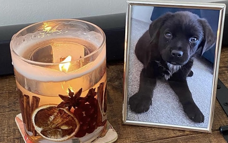 Framed picture of a black dog with a candle.