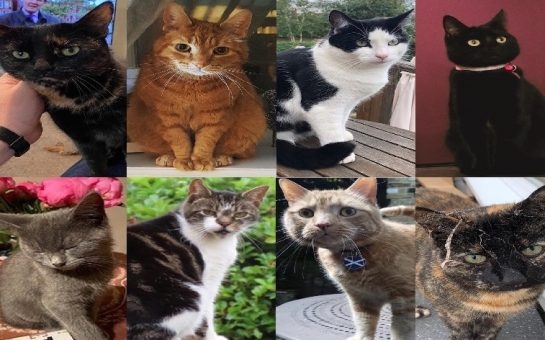 Eight shortlisted cat-didates