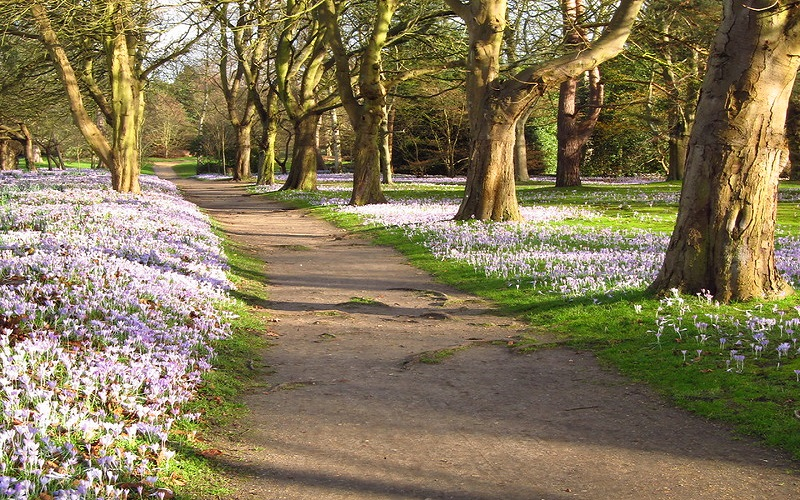 Crocus Walk at Cannizaro Park