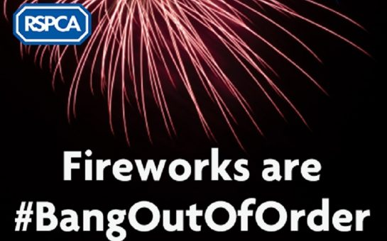 rspca bang out of order poster