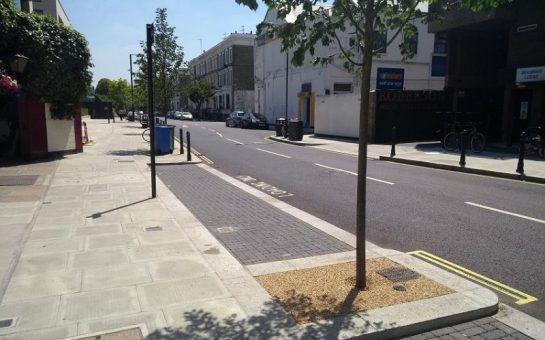 a tree in a street