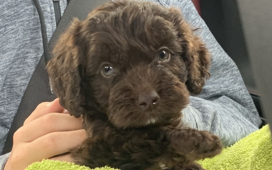 puppy bought from puppy farms