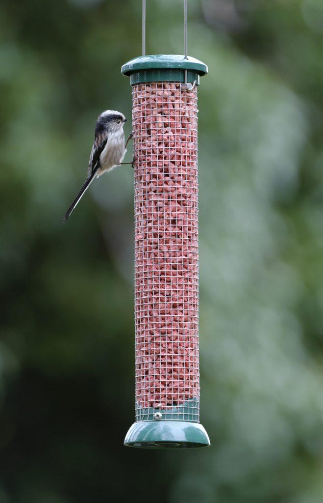 Long-tailed Tit at birdfeeder