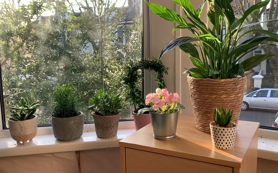 plant ownership