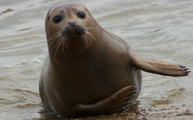 Freddie the seal