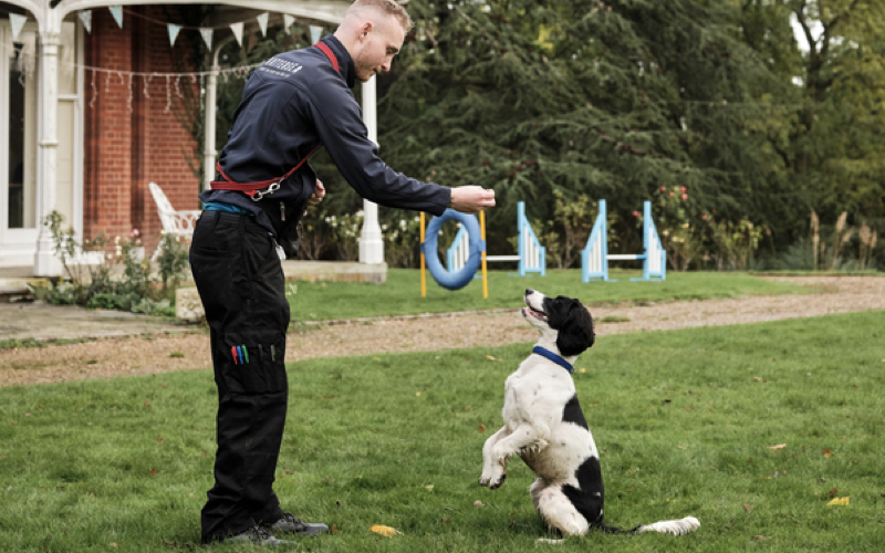 A young, male Battersea trainer with short, blonde hair teaches a black and white spaniel to beg. The dog is on his hind legs, looking up at the treat in the trainer's outstretched hand. He has red lead tied around his waist, a navy jacket, and has lots of different coloured pens in his black trouser pocket. They are in a garden, on green grass with a path behind them which winds into trees. There is also a red brick house with a white porch and bunting, in the background to the left. On the right, there is two blue dog jumps and a blue ring as well as trees in the background.