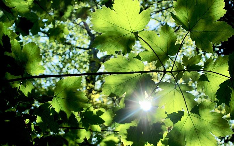 trees_air_pollution