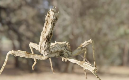 Photorealistic insects can be used to rig animations in games and movies.