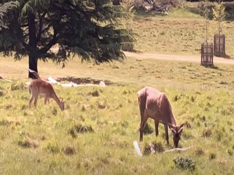 Deer in Richmond Psrk