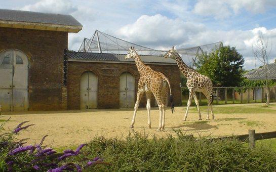 London_Zoo