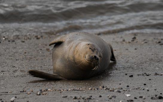 Freddie the seal smiling in London