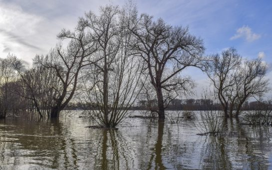 trees in a flooded patch of ground