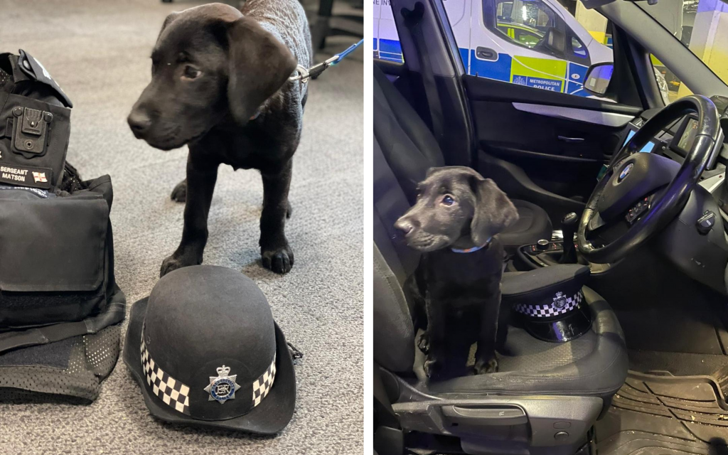 Two pictures of Opie at Hammersmith Police Station. One shows him posing with a police hat and the other sitting in the police car.